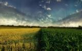 Наша пшеница, кукуруза и помидоры - конкуренты в ЕС: Польша выступает против льгот на импорт украинских продуктов в Европу