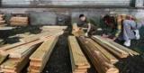 Лікарні та дитсадки у Росії запропонували будувати з дерева